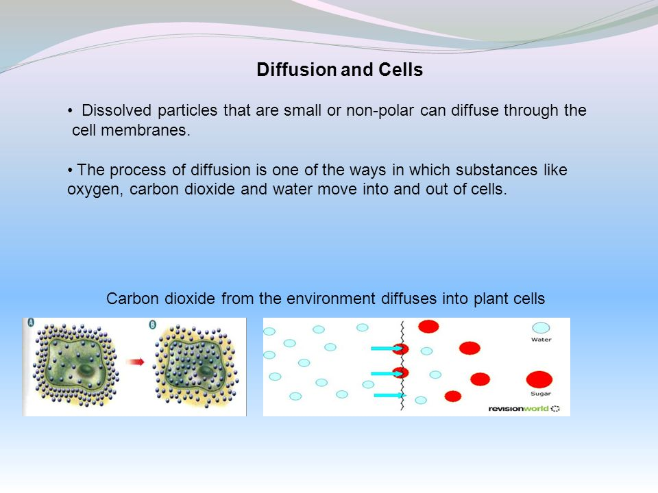 Diffusion and Cells Dissolved particles that are small or non-polar can diffuse through the cell membranes. The process of diffusion is one of the way