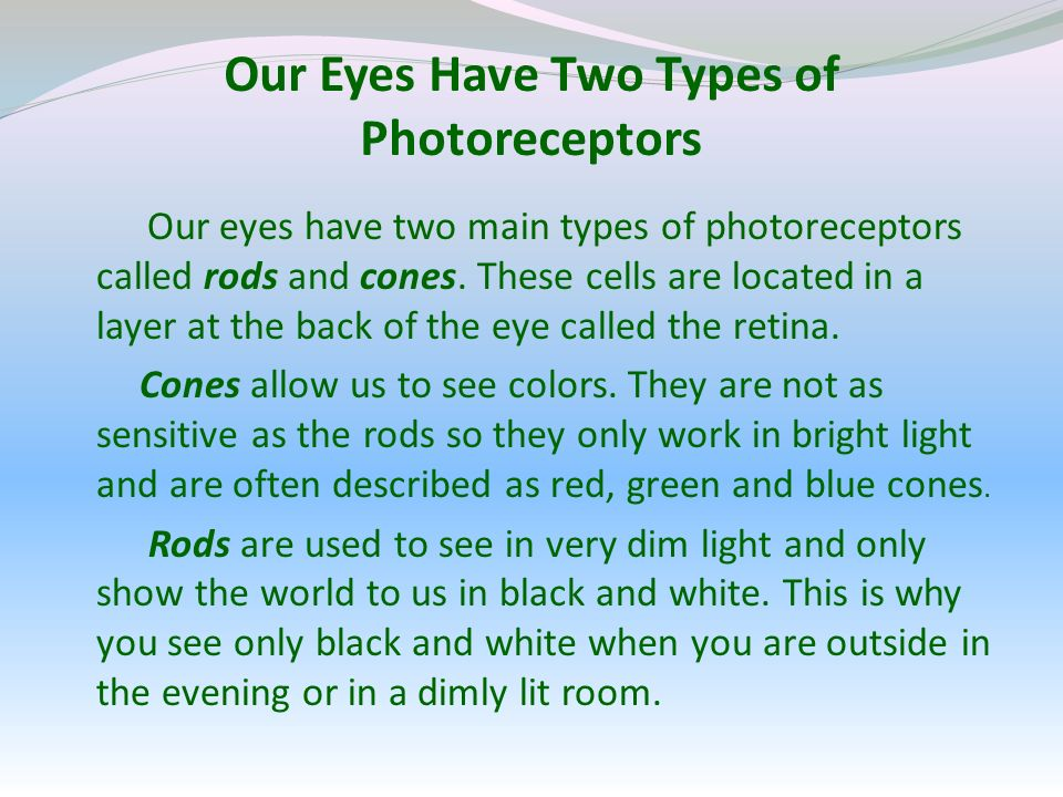 Our Eyes Have Two Types of Photoreceptors Our eyes have two main types of photoreceptors called rods and cones.