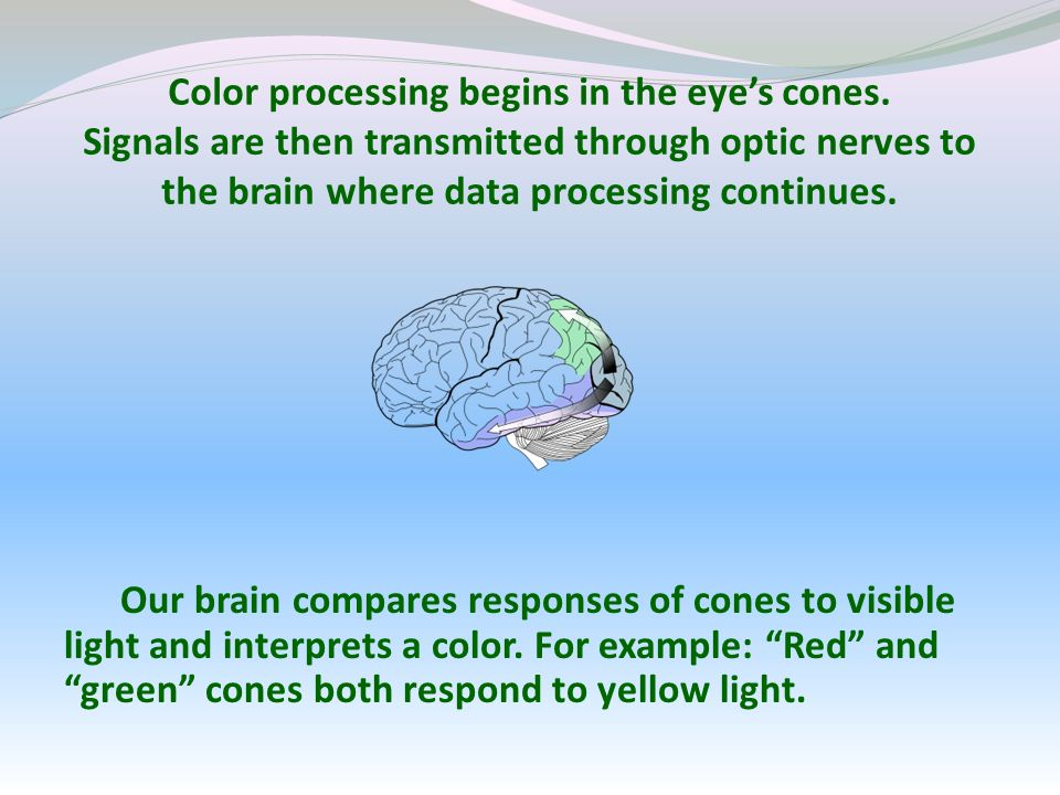 Color processing begins in the eyes cones.