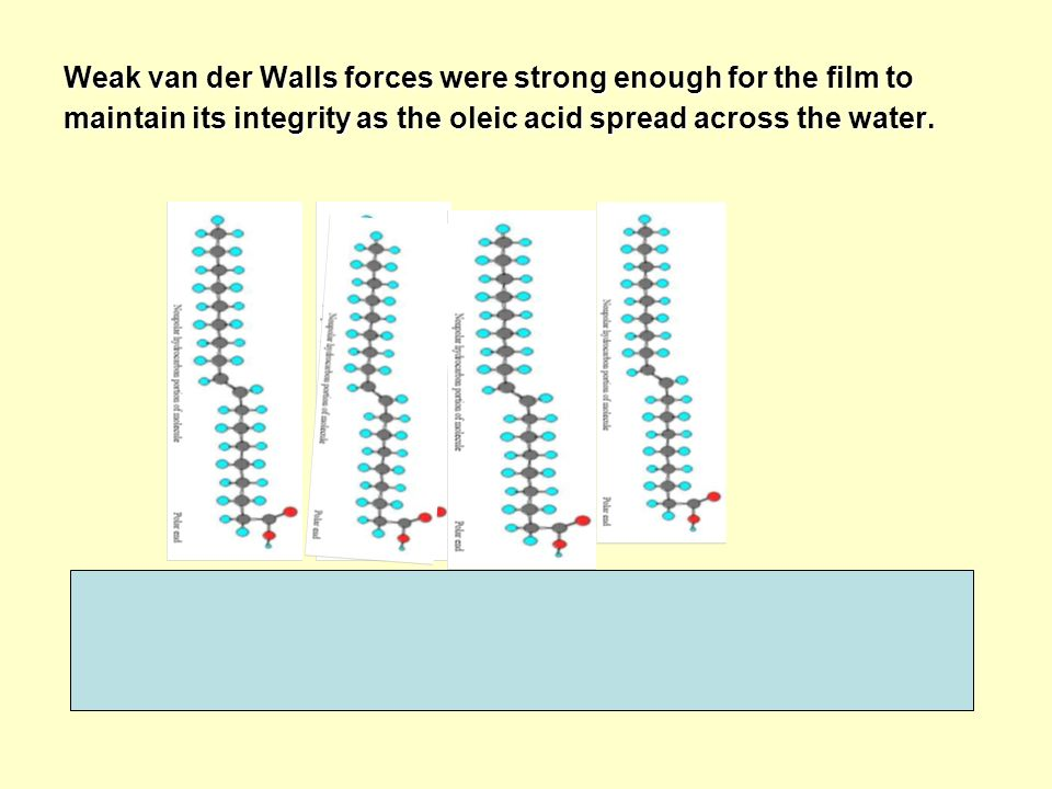 Weak van der Walls forces were strong enough for the film to maintain its integrity as the oleic acid spread across the water.