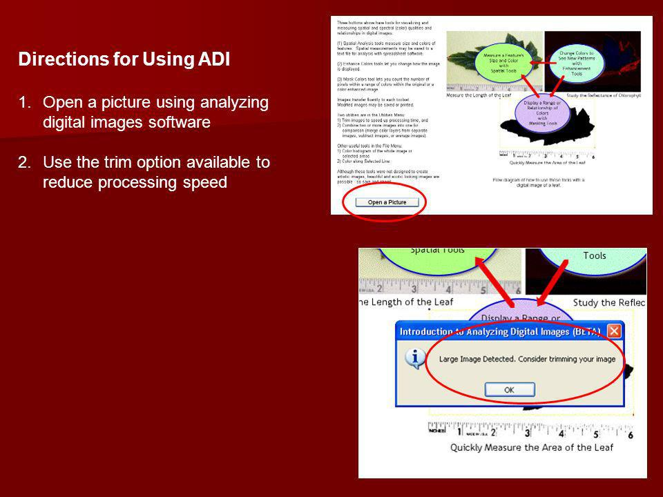 Directions for Using ADI 1.Open a picture using analyzing digital images software 2.Use the trim option available to reduce processing speed