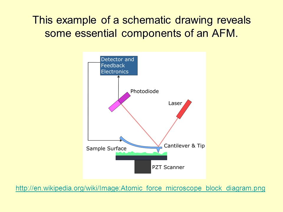 This example of a schematic drawing reveals some essential components of an AFM.