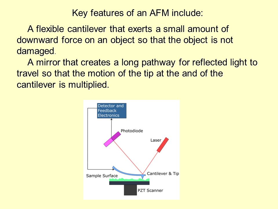 Key features of an AFM include: A flexible cantilever that exerts a small amount of downward force on an object so that the object is not damaged. A m
