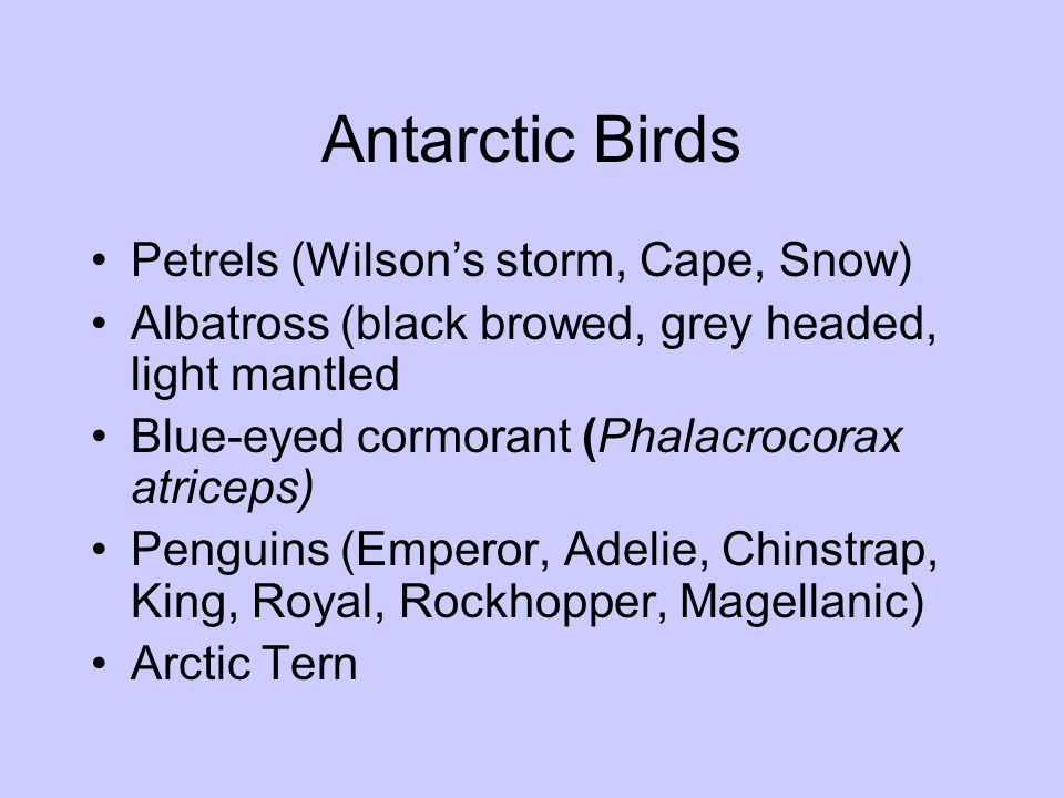 Antarctic Birds Petrels (Wilsons storm, Cape, Snow) Albatross (black browed, grey headed, light mantled Blue-eyed cormorant (Phalacrocorax atriceps) P