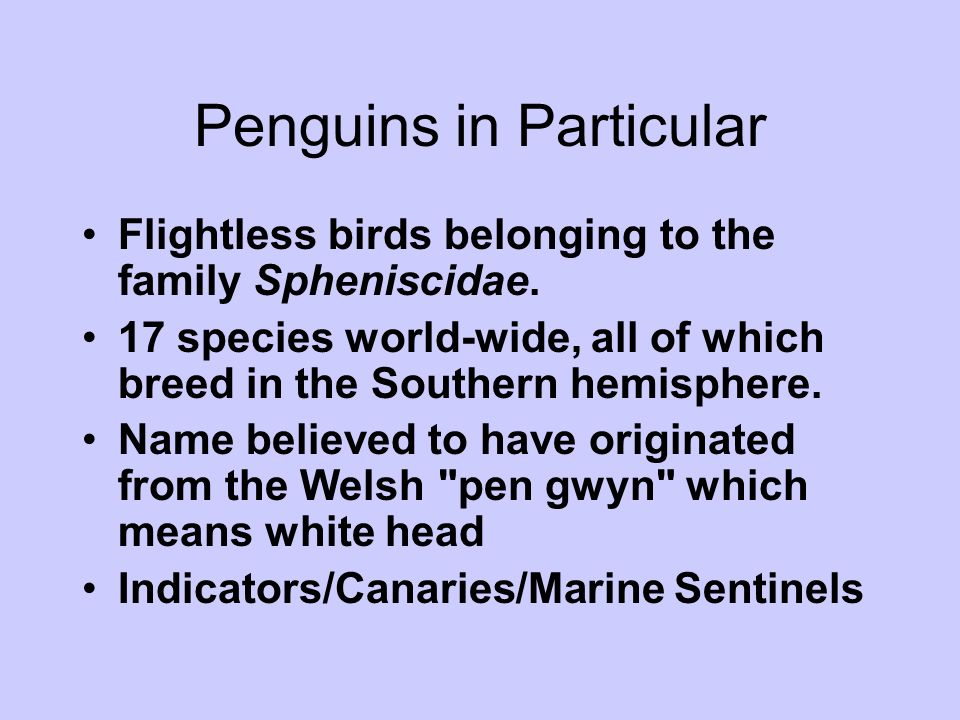 Flightless birds belonging to the family Spheniscidae. 17 species world-wide, all of which breed in the Southern hemisphere. Name believed to have ori