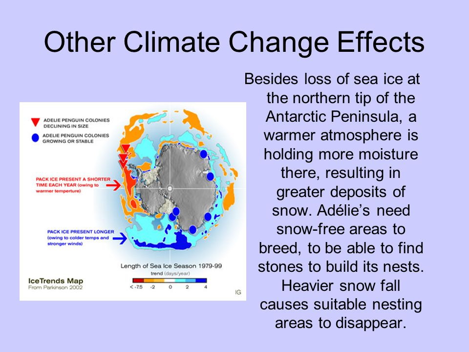 Other Climate Change Effects Besides loss of sea ice at the northern tip of the Antarctic Peninsula, a warmer atmosphere is holding more moisture ther