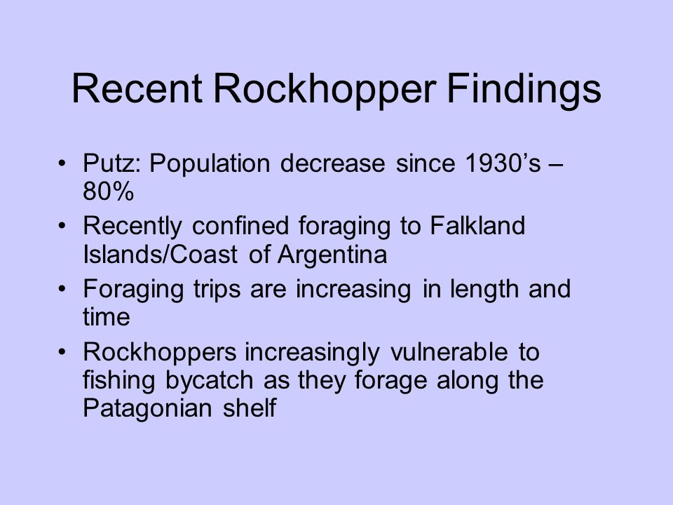 Recent Rockhopper Findings Putz: Population decrease since 1930s – 80% Recently confined foraging to Falkland Islands/Coast of Argentina Foraging trip