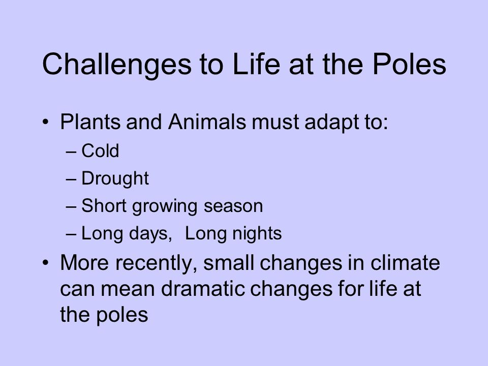 Challenges to Life at the Poles Plants and Animals must adapt to: –Cold –Drought –Short growing season –Long days, Long nights More recently, small ch