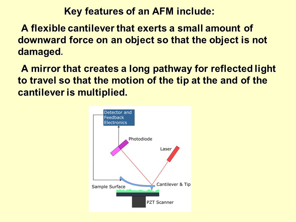 Key features of an AFM include: A flexible cantilever that exerts a small amount of downward force on an object so that the object is not damaged.