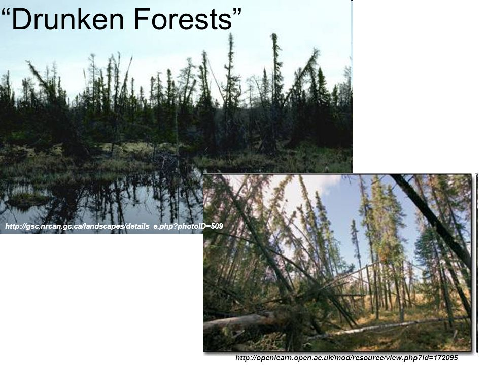 Drunken Forests http://openlearn.open.ac.uk/mod/resource/view.php?id=172095 http://gsc.nrcan.gc.ca/landscapes/details_e.php?photoID=509