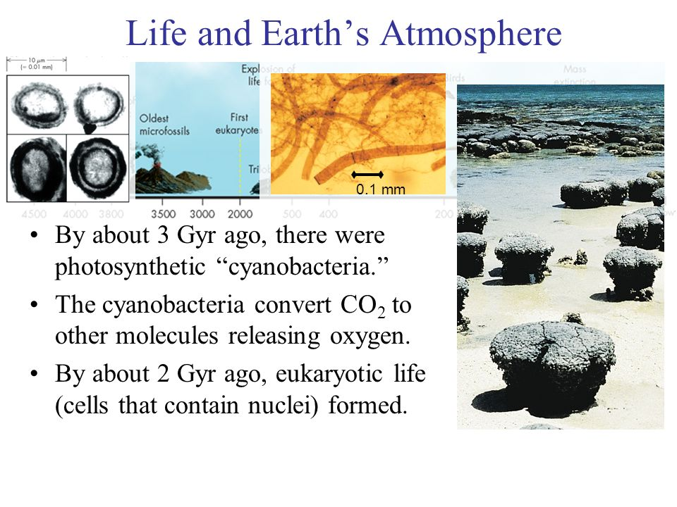 The Earliest Life By about 3 Gyr ago, there were photosynthetic cyanobacteria.