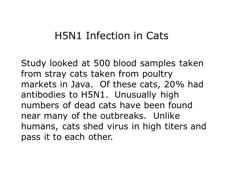 H5N1 Infection in Cats Study looked at 500 blood samples taken from stray cats taken from poultry markets in Java.