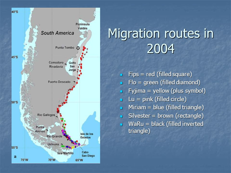 Migration routes in 2004 Fips = red (filled square) Fips = red (filled square) Flo = green (filled diamond) Flo = green (filled diamond) Fyjima = yellow (plus symbol) Fyjima = yellow (plus symbol) Lu = pink (filled circle) Lu = pink (filled circle) Miriam = blue (filled triangle) Miriam = blue (filled triangle) Silvester = brown (rectangle) Silvester = brown (rectangle) WaRu = black (filled inverted triangle) WaRu = black (filled inverted triangle)