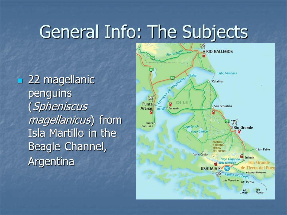 General Info: The Subjects 22 magellanic penguins (Spheniscus magellanicus) from Isla Martillo in the Beagle Channel, Argentina 22 magellanic penguins (Spheniscus magellanicus) from Isla Martillo in the Beagle Channel, Argentina