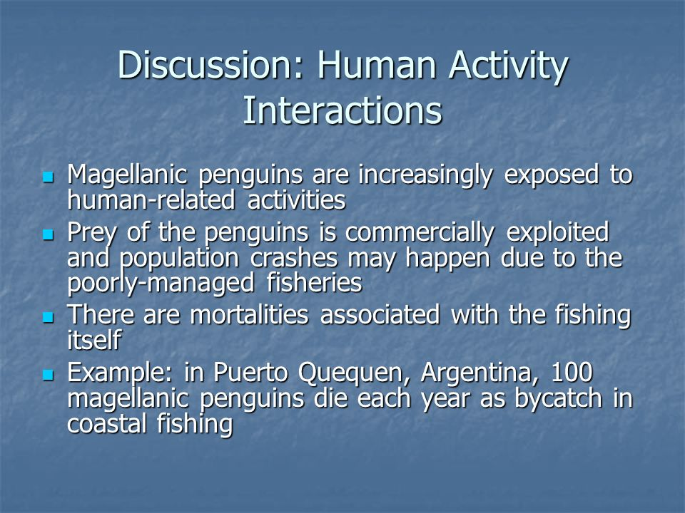 Discussion: Human Activity Interactions Magellanic penguins are increasingly exposed to human-related activities Magellanic penguins are increasingly exposed to human-related activities Prey of the penguins is commercially exploited and population crashes may happen due to the poorly-managed fisheries Prey of the penguins is commercially exploited and population crashes may happen due to the poorly-managed fisheries There are mortalities associated with the fishing itself There are mortalities associated with the fishing itself Example: in Puerto Quequen, Argentina, 100 magellanic penguins die each year as bycatch in coastal fishing Example: in Puerto Quequen, Argentina, 100 magellanic penguins die each year as bycatch in coastal fishing