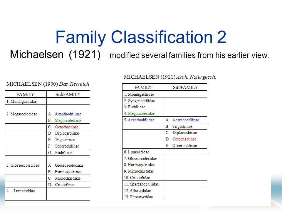 Family Classification 2 Michaelsen (1921) – modified several families from his earlier view.