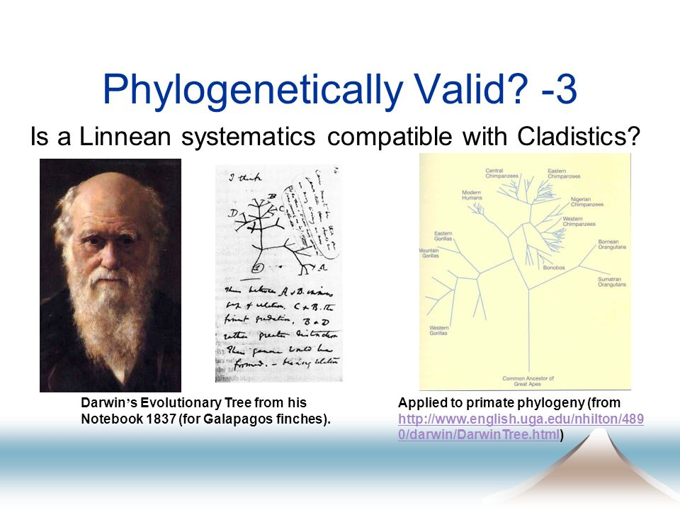 Phylogenetically Valid? -3 Is a Linnean systematics compatible with Cladistics? Darwin s Evolutionary Tree from his Notebook 1837 (for Galapagos finch