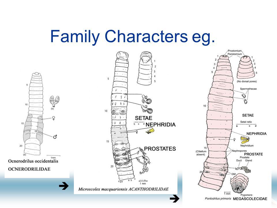 Family Characters eg.