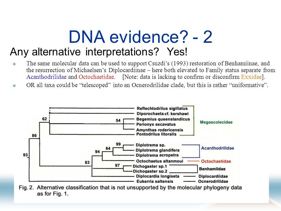 DNA evidence? - 2 Any alternative interpretations? Yes! The same molecular data can be used to support Csuzdis (1993) restoration of Benhamiinae, and