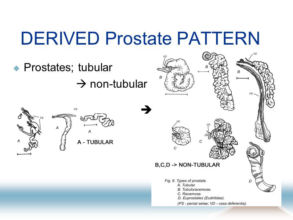 DERIVED Prostate PATTERN Prostates; tubular non-tubular