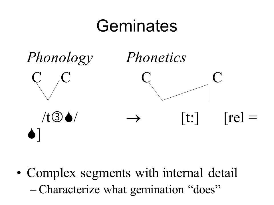 Geminates PhonologyPhonetics C C C C /t / [t:] [rel = ] Complex segments with internal detail –Characterize what gemination does