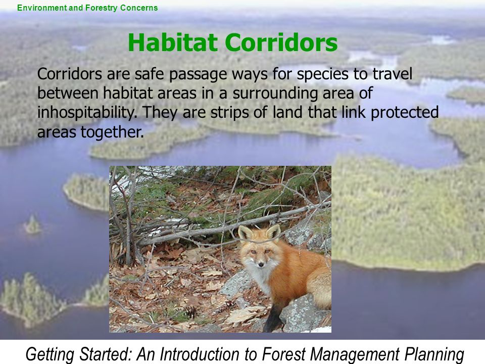 Getting Started: An Introduction to Forest Management Planning Corridors are safe passage ways for species to travel between habitat areas in a surrou
