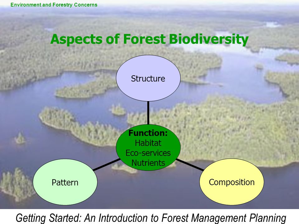 Getting Started: An Introduction to Forest Management Planning Aspects of Forest Biodiversity Function: Habitat Eco-services Nutrients StructureCompos