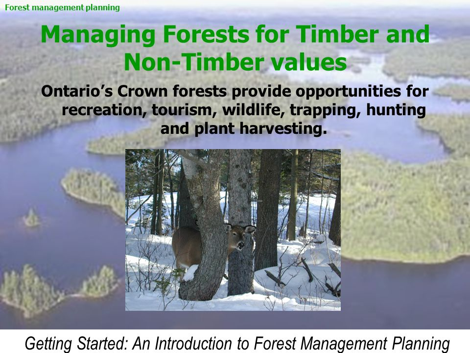 Getting Started: An Introduction to Forest Management Planning Managing Forests for Timber and Non-Timber values Ontarios Crown forests provide opport