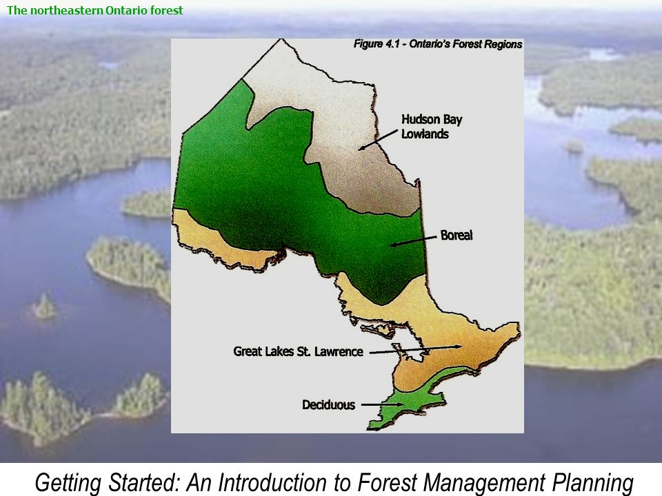 Getting Started: An Introduction to Forest Management Planning The northeastern Ontario forest