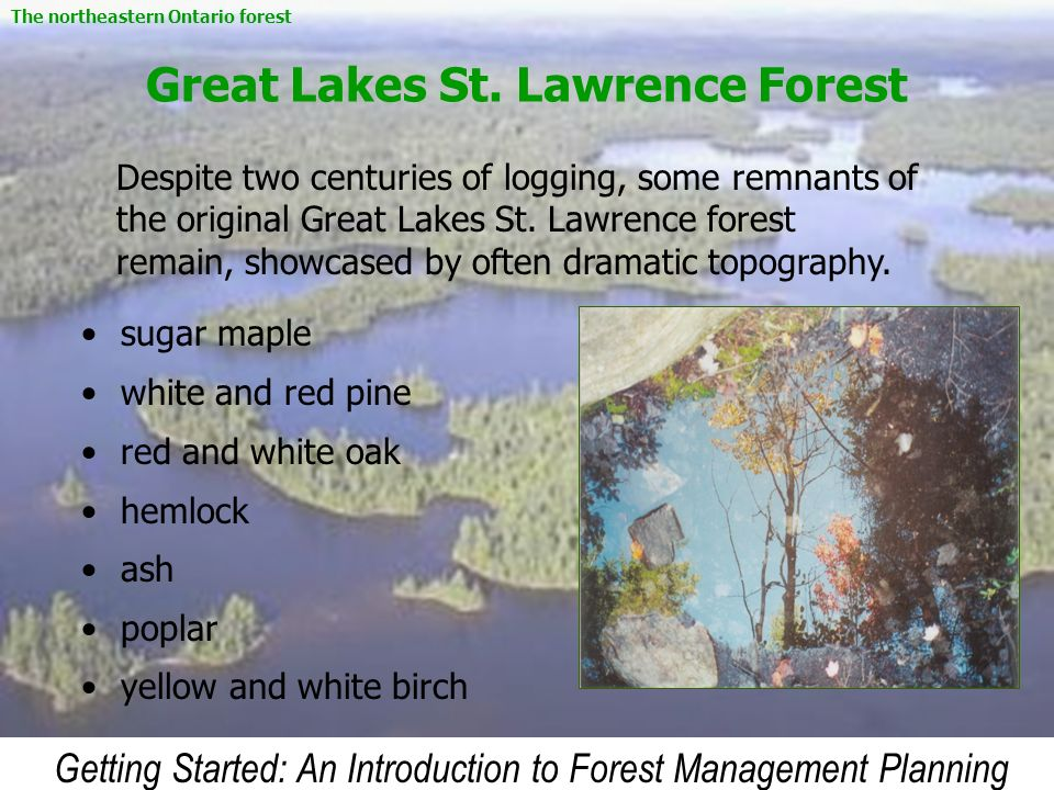 Getting Started: An Introduction to Forest Management Planning Great Lakes St. Lawrence Forest sugar maple white and red pine red and white oak hemloc