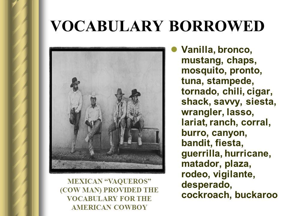 VOCABULARY BORROWED Vanilla, bronco, mustang, chaps, mosquito, pronto, tuna, stampede, tornado, chili, cigar, shack, savvy, siesta, wrangler, lasso, l