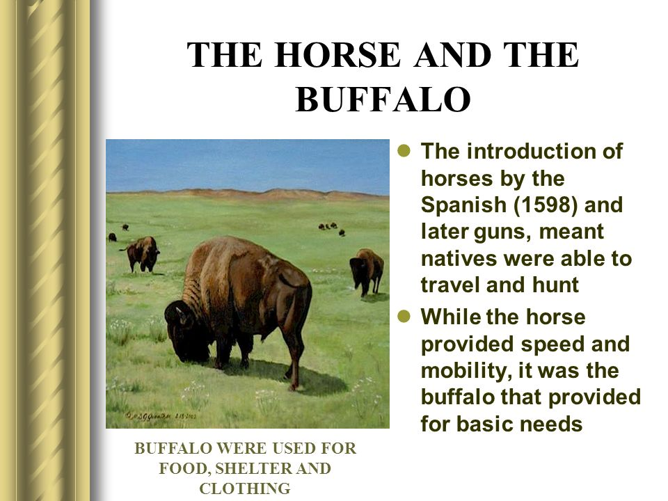 THE HORSE AND THE BUFFALO The introduction of horses by the Spanish (1598) and later guns, meant natives were able to travel and hunt While the horse