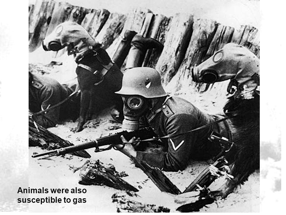 Animals were also susceptible to gas