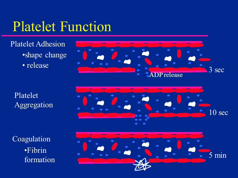 Platelet Function Platelet Adhesion shape change release ADP release Platelet Aggregation Coagulation Fibrin formation 3 sec 10 sec 5 min