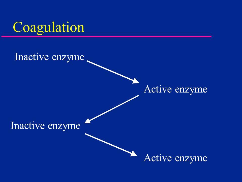 Coagulation Inactive enzyme Active enzyme Inactive enzyme