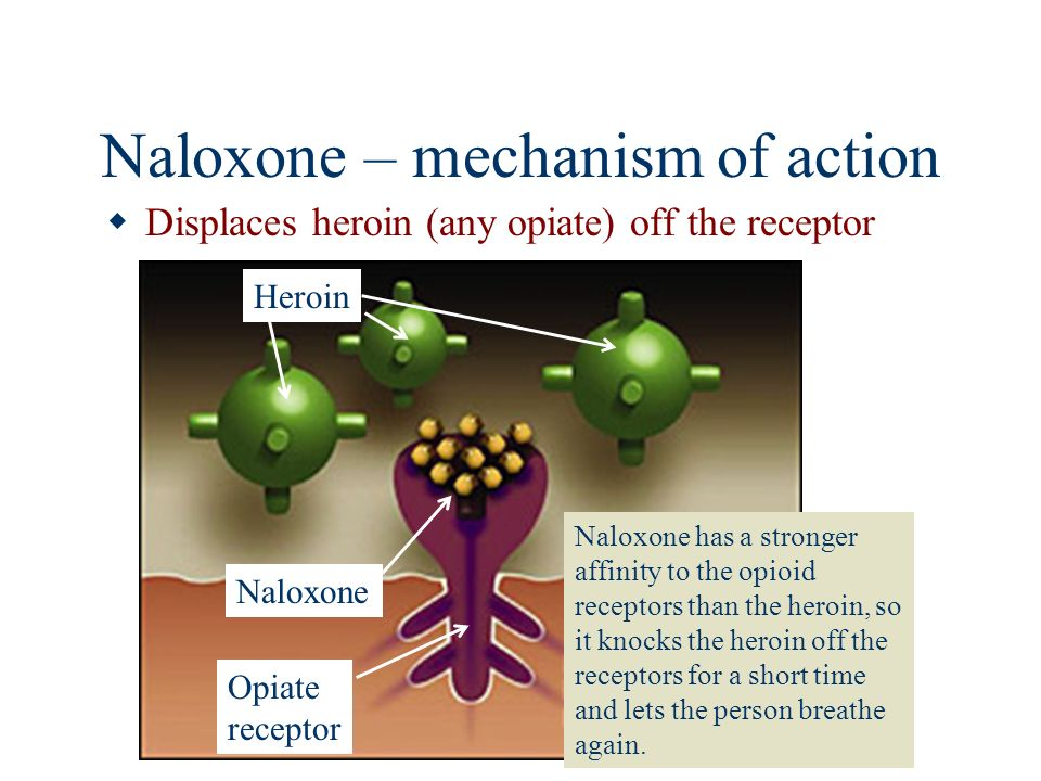 Naloxone – mechanism of action Displaces heroin (any opiate) off the receptor Naloxone has a stronger affinity to the opioid receptors than the heroin