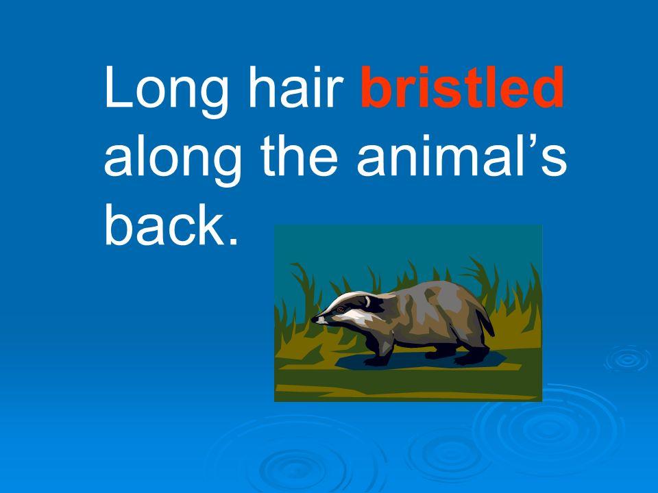 Long hair bristled along the animals back.