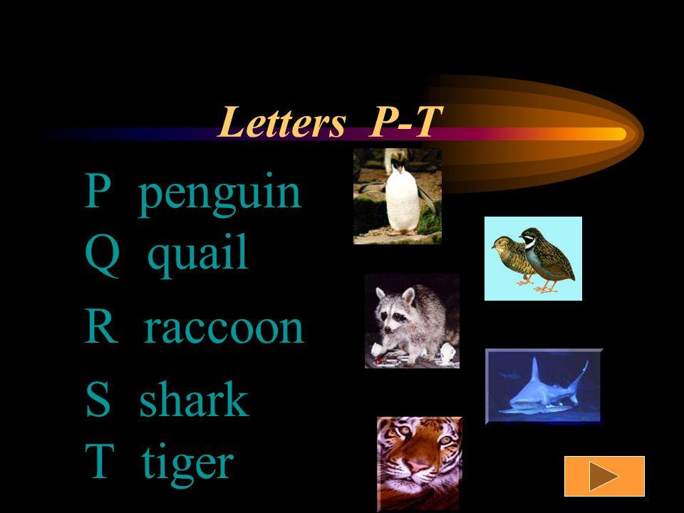 Letters K-O K kangaroo L llama M monkey N newt O octopus