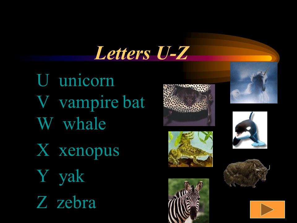 Letters P-T P penguin Q quail R raccoon S shark T tiger