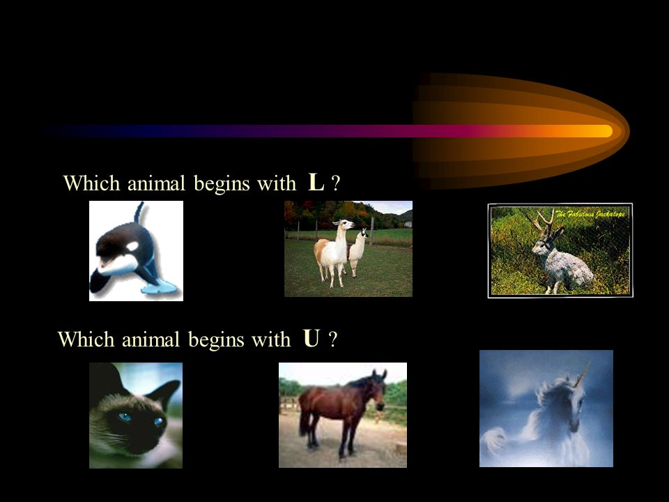 PICK THE ANIMAL Which animal begins with D ? Which animal begins with E ?