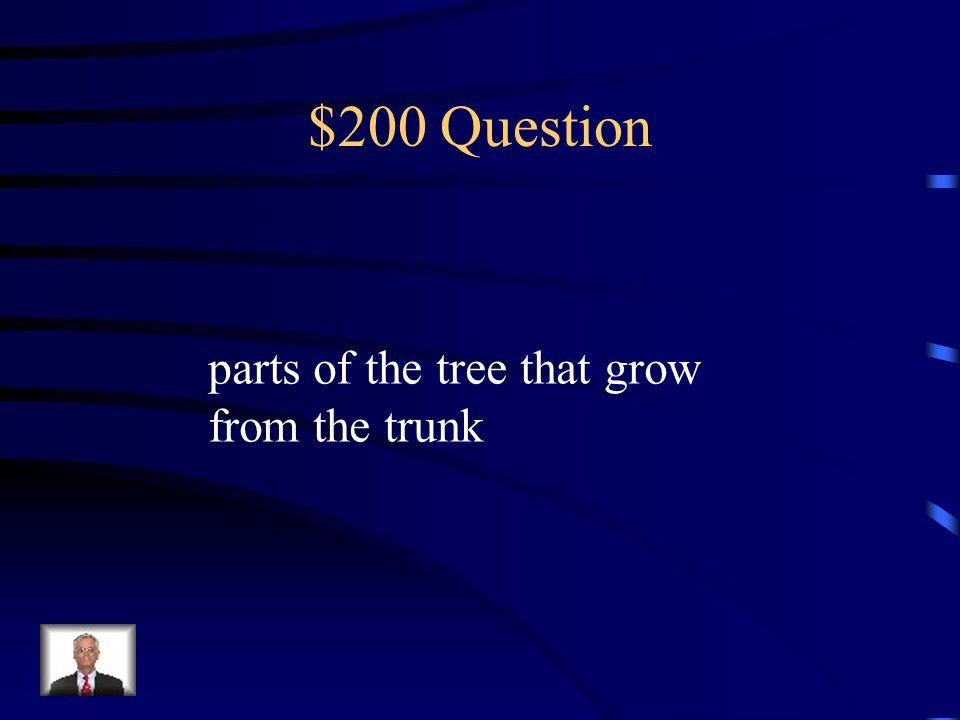 $200 Question parts of the tree that grow from the trunk