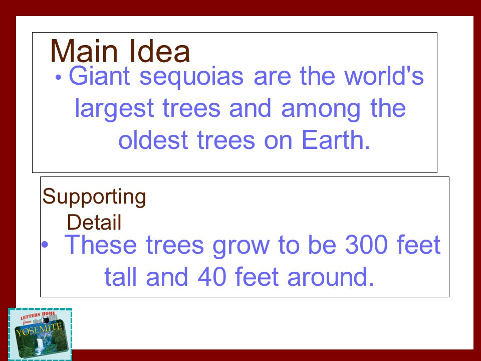 Giant sequoias are the world's largest trees and among the oldest trees on Earth. These trees grow to be 300 feet tall and 40 feet around. Main Idea S