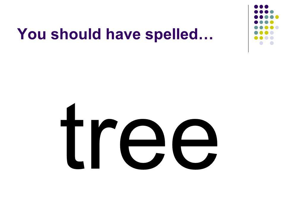 Use the black letters from street to make a word for what maples, oaks, pines, and firs are. street