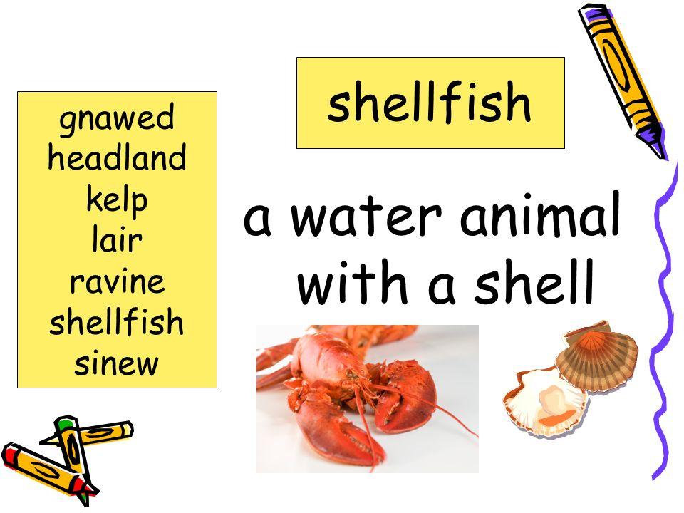 Words to Know gnawed headland kelp lair ravine shellfish sinew