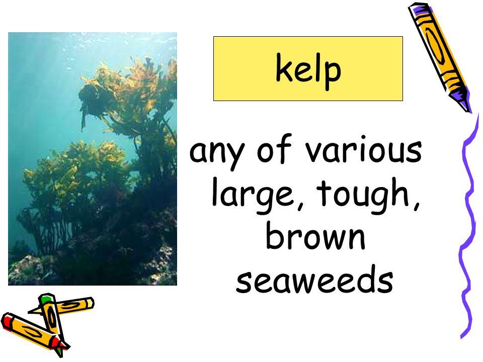 a water animal with a shell shellfish gnawed headland kelp lair ravine shellfish sinew