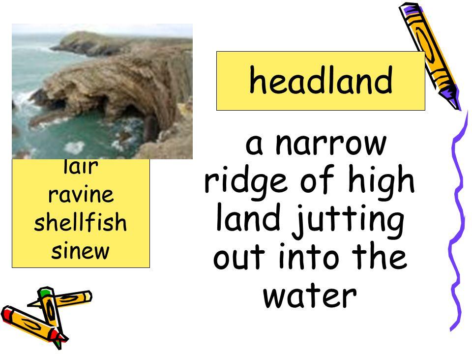 any of various large, tough, brown seaweeds kelp gnawed headland kelp lair ravine shellfish sinew