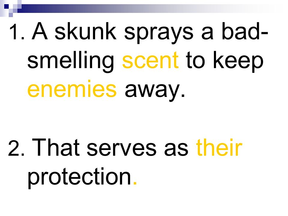 1. A skunk sprays a bad- smelling scent to keep enemies away. 2. That serves as their protection.