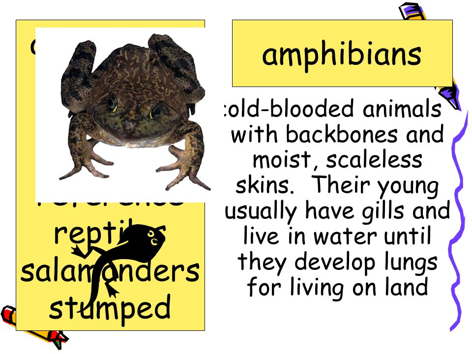 act of displaying; public showing exhibit amphibians crime exhibit lizards reference reptiles salamanders stumped