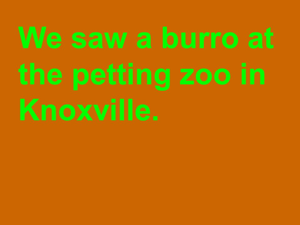 We saw a burro at the petting zoo in Knoxville.