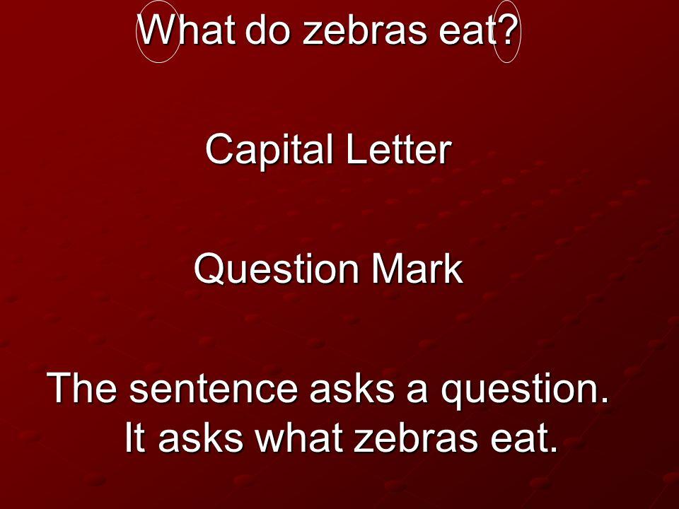 What do zebras eat? Capital Letter Question Mark The sentence asks a question. It asks what zebras eat.